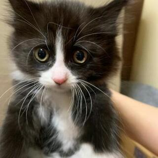 生後1〜2ヶ月の子猫ちゃん5匹です。一緒に過ごしてくれる里親さん...