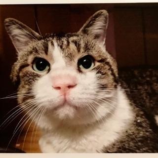 強運な事故猫さんの里親さん募集