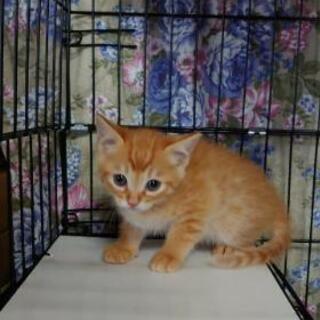 【🐈里親さん決まりました🐈】5匹の可愛い子猫ちゃんの里親募集🐈