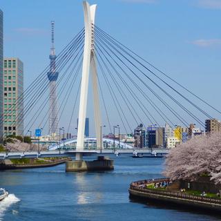3月28日(日)隅田川・スカイツリー・桜を眺めながら… 🌸お花見ワイン会🌸  IN 月島 を自粛中止します。の画像