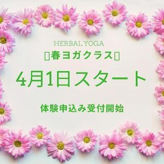 4月1日〜春ヨガstart🌺体験募集中(*´˘`*)♡