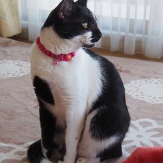黒白猫(1〜2歳)里親様募集🎵元気すぎる🐾甘えん坊