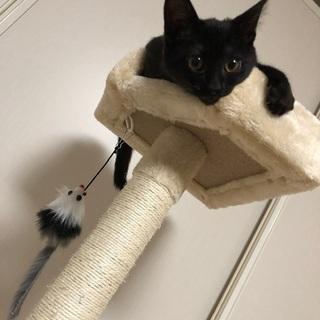 里親候補者みつかりました。生後6ヶ月の元気な黒猫ちゃんです