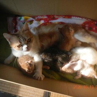 2月28日産まれの仔猫5匹「引き渡しは離乳後」