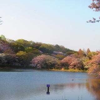 【お花見ラン】川崎駅付近の銭湯から三ッ池公園まで往復約8kmラン...