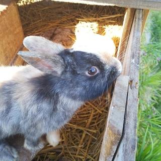 ウサギの 里親募集