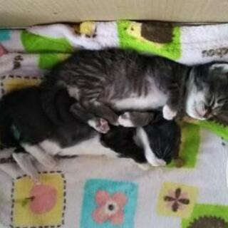 3月1日産まれの男の子2匹