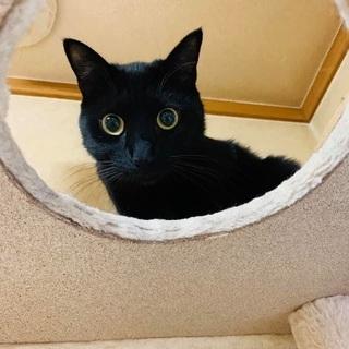 おとなしくて人間大好きかわいい黒猫❤️🐈