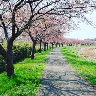 [3月29日]お花見ヨガ