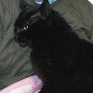 甘えん坊の黒猫の男の子