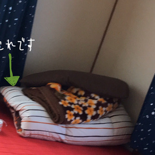 ❗️28日29日限定❗️羽毛掛け布団