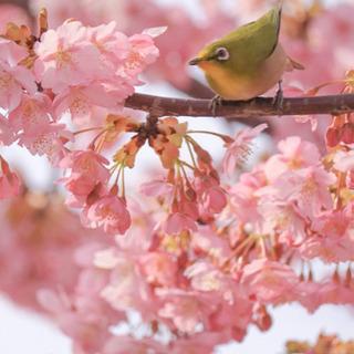 桜を撮りに行きましょー📸