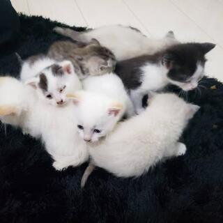 捨て猫8匹