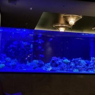 大型高級アクリル水槽❗1800幅