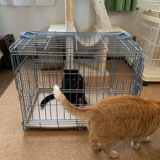 折りたたみケージ 小型犬、ネコ用