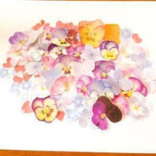 ドライフラワー 押し花 ドライフルーツ