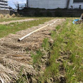 お米作り 籾まき 不耕起栽培