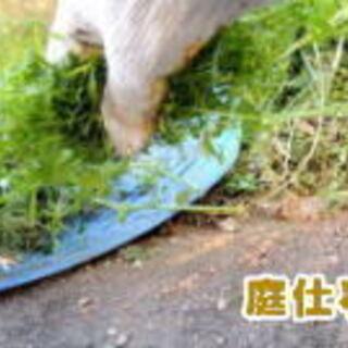(4) 草刈り、草抜き、除草剤の散布、砂利敷、庭掃除、お庭・植木...