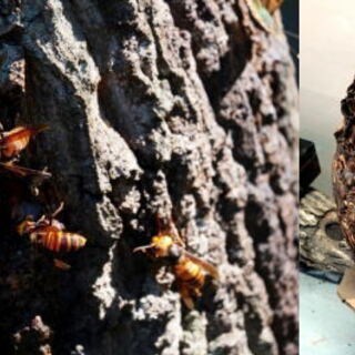 (4) スズメバチ、蜂の巣駆除、害虫駆除、害鳥駆除ならお任せ下さ...