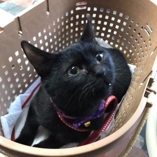 ★子猫ゆずります★生後4ヶ月くらいの黒猫ちゃん、女の子。