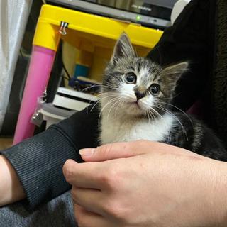 生後2ヶ月半くらいの子猫ちゃんの画像