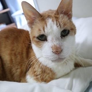 最近飼い主を亡くした高齢猫です。甘えん坊です。
