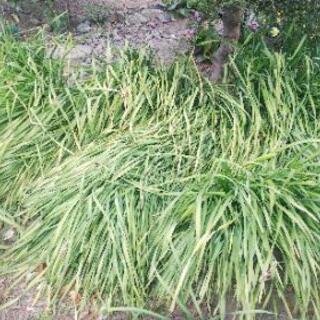 【熊谷市の便利屋】草刈りと草の処分を承ります