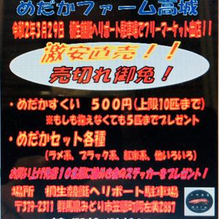 緊急報告❗️【めだかファーム高城】煌会からのフリマ出店