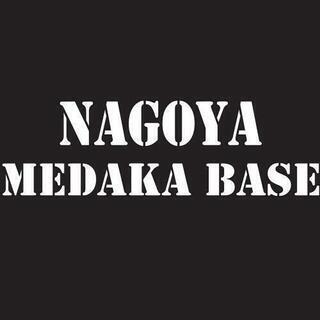 *希少の銀杏浮苔‼️浮草・ 数量限定 NMB - 名古屋市