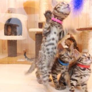 🐻子猫~入店してま~す🐻