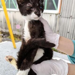 子猫(⑥女の子)