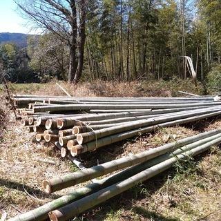 孟宗竹1m1本 園芸用支柱 鹿威し 竹資材 農業用支柱に