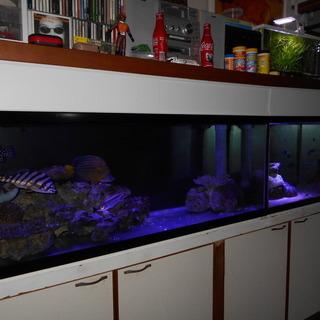 120水槽セット+海水魚
