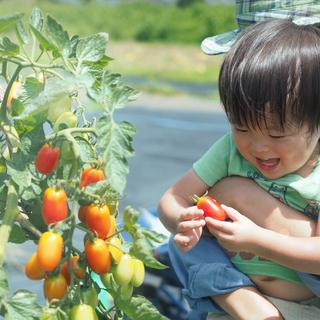 【シェア畑】お野菜栽培にご興味のある方大募集‼【妙蓮寺】