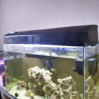 Nisso 海水魚 蛍光灯 蛍光灯付いています。
