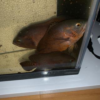 熱帯魚 さん 屋 の 近く