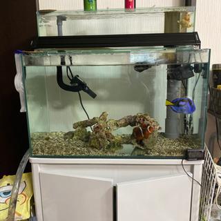 海水魚、水槽、その他、引き取り限定、バラ売りしません。