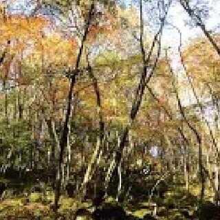 ⭐徳島県の山行こうよ(オプチャ)