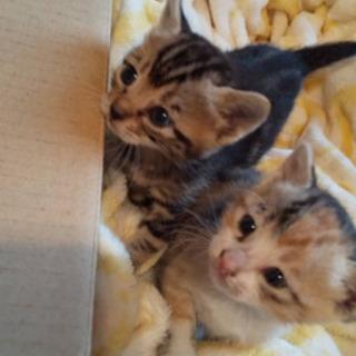 生後3.4週間のメス仔猫