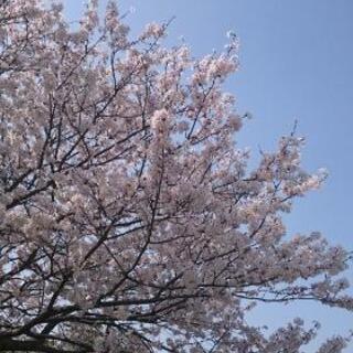 4月8日⭐無料⭐ヘナで白髪染め