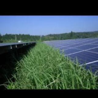 野立太陽光の草刈りします!