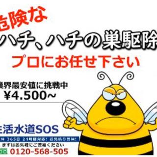 蜂、蜂の巣 駆除 ▶︎先ずはご相談下さい!