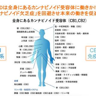 【安心の国内製造品】身体の免疫力を高めるCBDヘンプオイル④ - 高岡市
