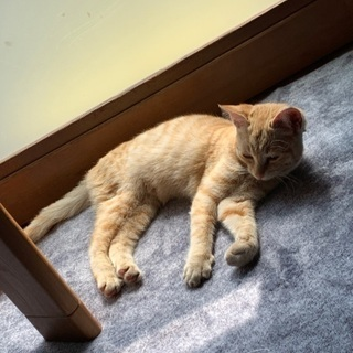 生後半年の抱っこ大好き子猫