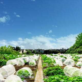 【シェア畑】お野菜栽培にご興味のある方大募集‼【センター北】