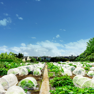 【シェア畑】お野菜栽培にご興味のある方大募集‼【横浜江田】