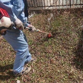 【植木1本から】植木の剪定や、草刈り、草取りします。