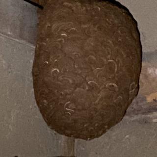 蜂の巣を駆除する仕事です 未経験者元営業マン大歓迎