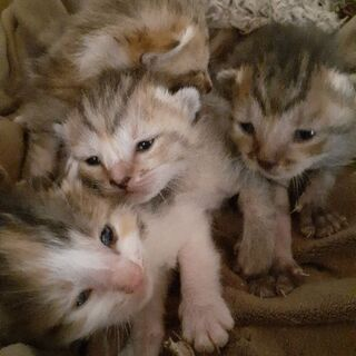 保護猫五匹