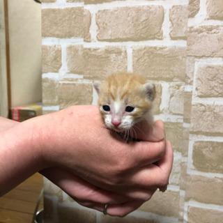 6匹の保護猫、足先が白の茶トラ子猫